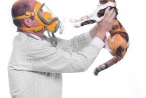 Behandeling huisdieren allergie