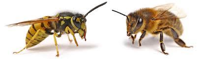 Insecten allergie zoals wespen bijen