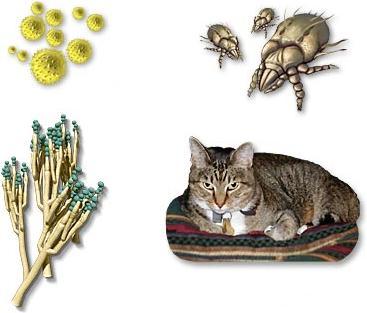Allergenen - allergeen